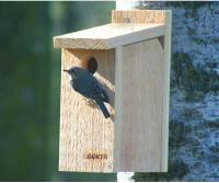 Songbird Essentials Bluebird View Thru Bird Feeder