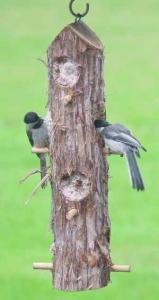Bird Food by Songbird Cedar