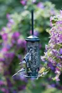 Squirrel Proof Bird Feeders by Brome Bird Care