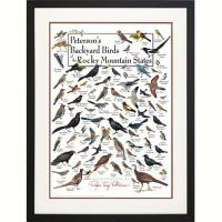 Steven M. Lewers & Associates Peterson's Backyard Birds of the Rocky Mountains Poster