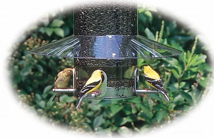 Birds Choice Classic Weather Guard