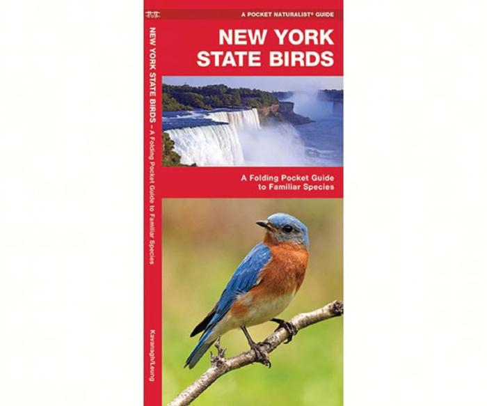 Waterford New York State Birds