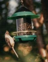 Becks Chickadee Bird Feeder