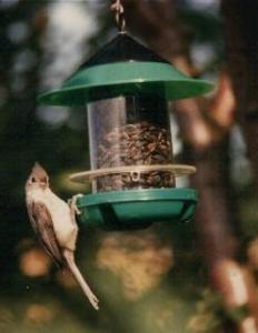 House / Hopper Bird Feeders by Becks