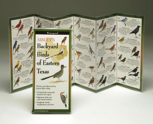 Steven M. Lewers & Associates Sibley's Backyard Birds Eastern Texas