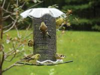 Birds Choice 3 Quart Forever Bird Feeder - Clear