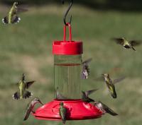 Songbird Essentials Dr. JB's 16 Ounce Clean Hummingbird Bird Feeder, All Red