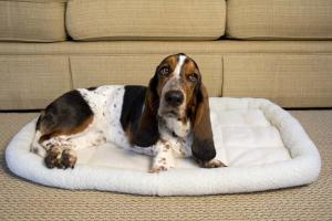 Dog Beds by Iconic Pet