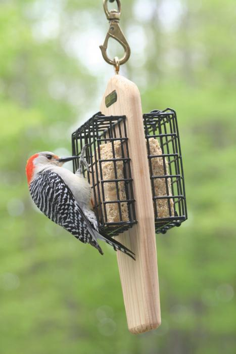 Birds Choice Double Cake Hanging Suet Bird Feeder