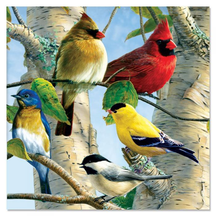 Tree Free Greetings Favorite Songbirds Magnet