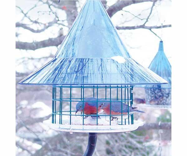 Arundale Sky Cafi Bluebird Feeder