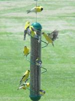 """Songbird Essentials 17"""" Green Spiral Finch Tube Bird Feeder"""