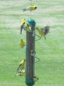 Tube / Finch Feeders by Songbird Essentials