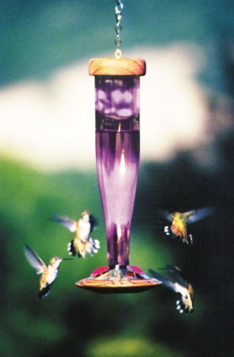 Schrodt Amethyst Lantern Hummingbird Bird Feeder