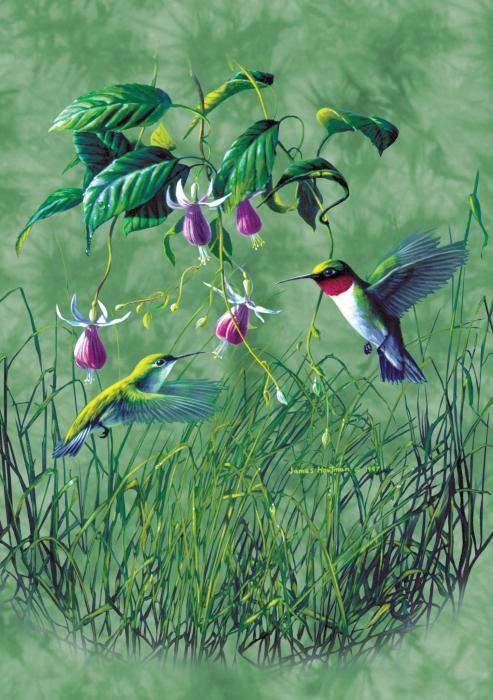 Tree Free Greetings Hummingbirds and Fuchsia Blank