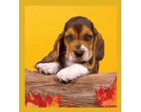 Magnetic Bookmark Basset Puppy