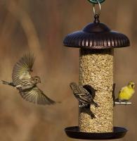 Hiatt Manufacturing Prairie Style Seed Tube Bird Feeder