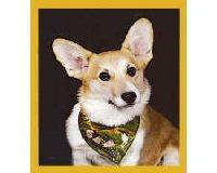 Magnetic Bookmark Corgie Puppy