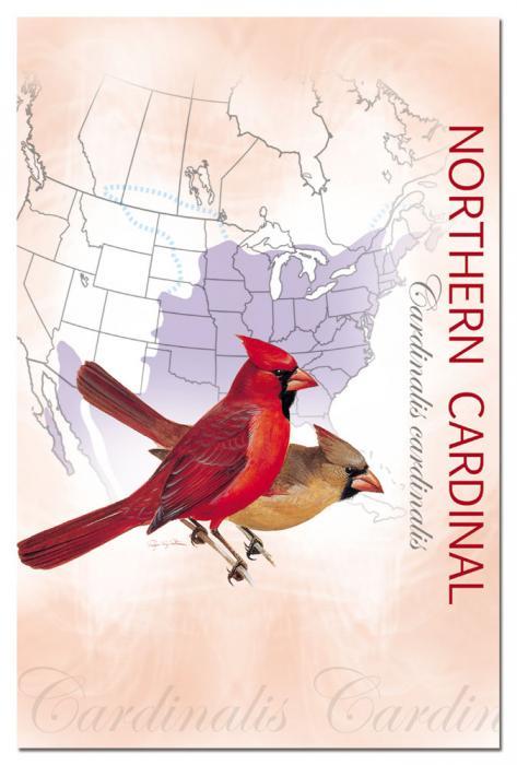 Tree Free Greetings Cardinal Eco Notes