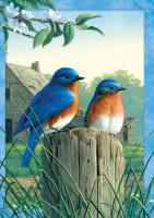 Tree Free Greetings Morning Bluebirds Blank