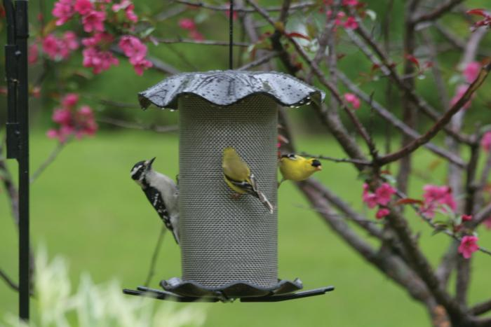 Birds Choice 3 Quart Forever Nyjer Bird Feeder - Smokey
