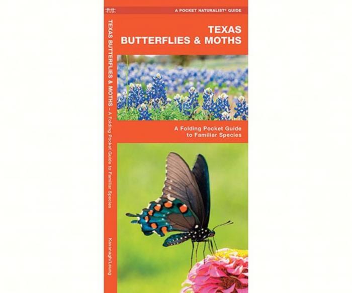 Waterford Texas Butterflies & Moths