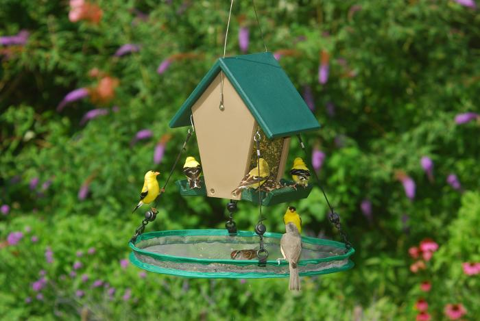 "Songbird Essentials 16"" Seed Hoop for Bird Feeder"