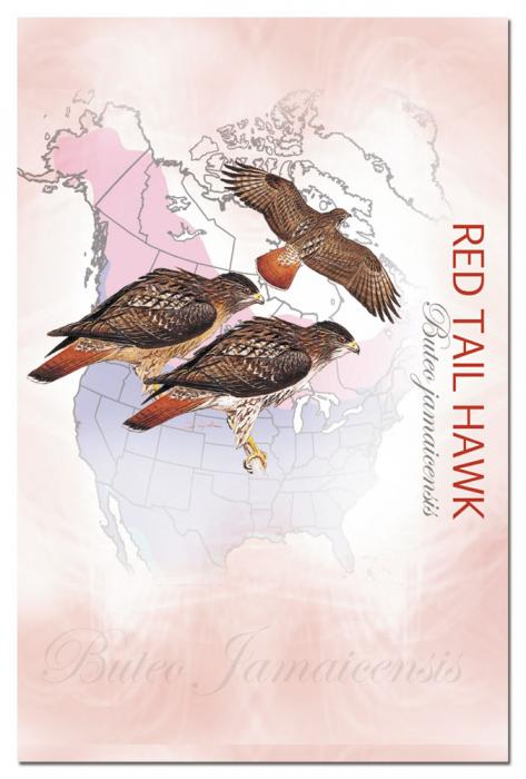 Tree Free Greetings Red Tail Hawk Eco Notes