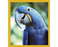 Magnetic Bookmark Macaw Hyacinth Blue