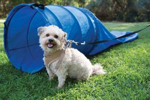 Dog Toys by Pacific Play Tents
