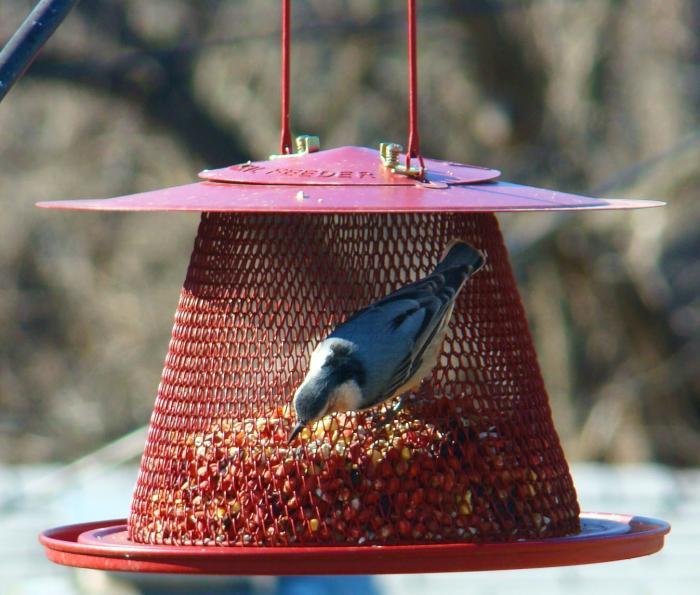 No-No Red Cardinal Wire Mesh Bird Feeder
