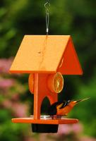 Songbird Essentials Fruit & Jelly Oriole Bird Feeder