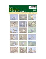 Impact Photographics Sticker Sheet Birds North America