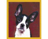 Magnetic Bookmark Boston Terrier