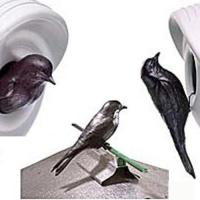 Purple Martin Decoy
