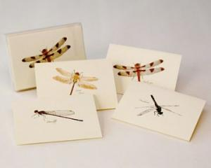 Steven M. Lewers & Associates Dragonfly & Damselfly Notecard Assortment (2 each of 4 styles)