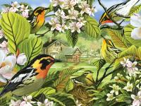 Outset Media Games Blackburnian Warblers Puzzle, 500 pieces