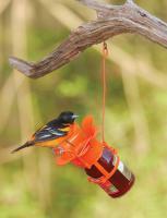 Bird Company Jelly Oriole Bird Feeder