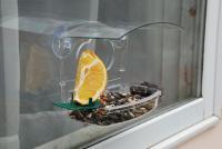 Woodlink Audubon Series Window Treat Window Bird Feeder