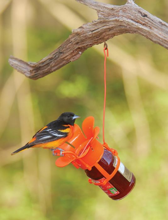 Bird Company Jelly Oriole Bird Feeder