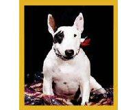 Magnetic Bookmark English Bull Terrier Puppy