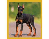 Magnetic Bookmark Doberman Puppy
